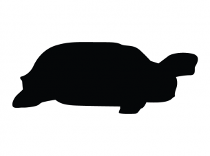 Turtle Stencil Printable Crafts