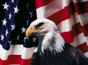 Printable Bald Eagle Picture