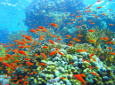 Underwater Orange Fish Nature Pictures